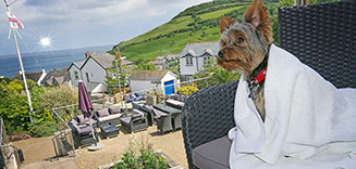 Dogs welcome hotels cornwall